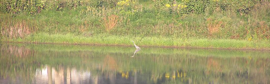 Heron on Lost Lake